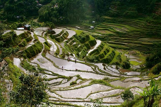 Banaue pirinç tarlaları filipinler